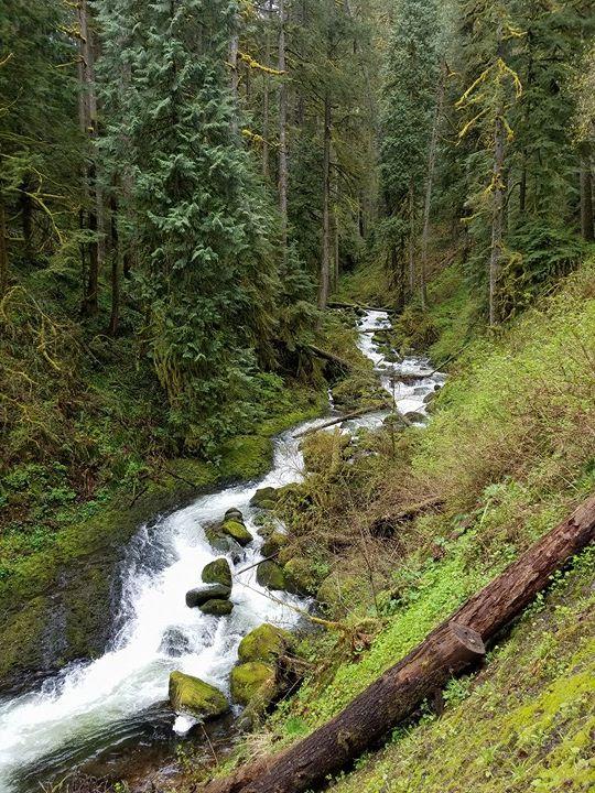 Oregon19